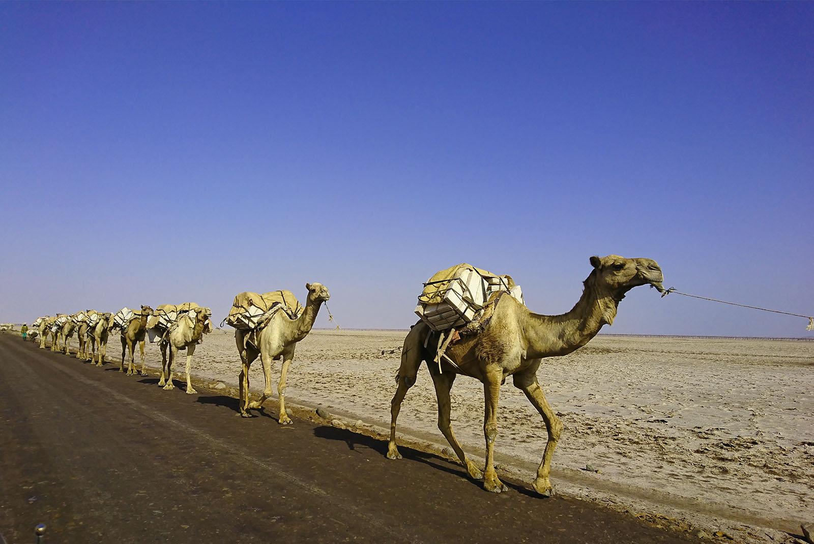 Tour travel to The Ethiopian desert of Afar