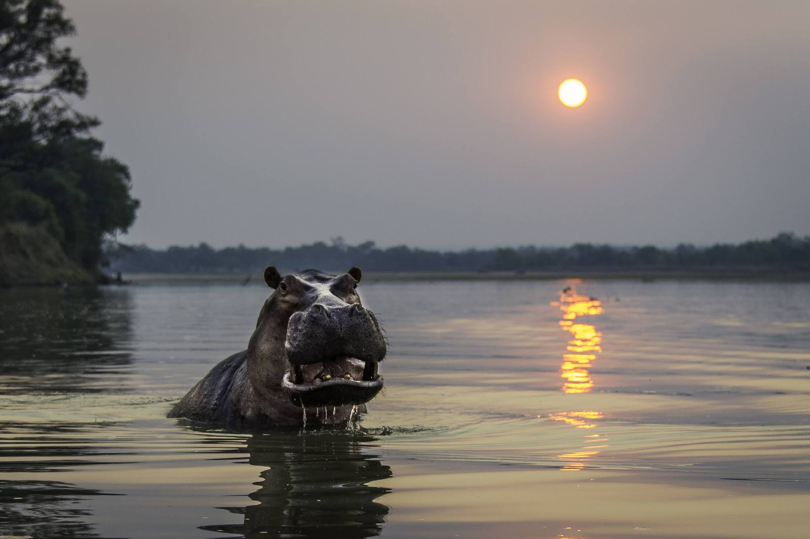 lake-langano-hippo-ethiopia-adventure-tours.jpg