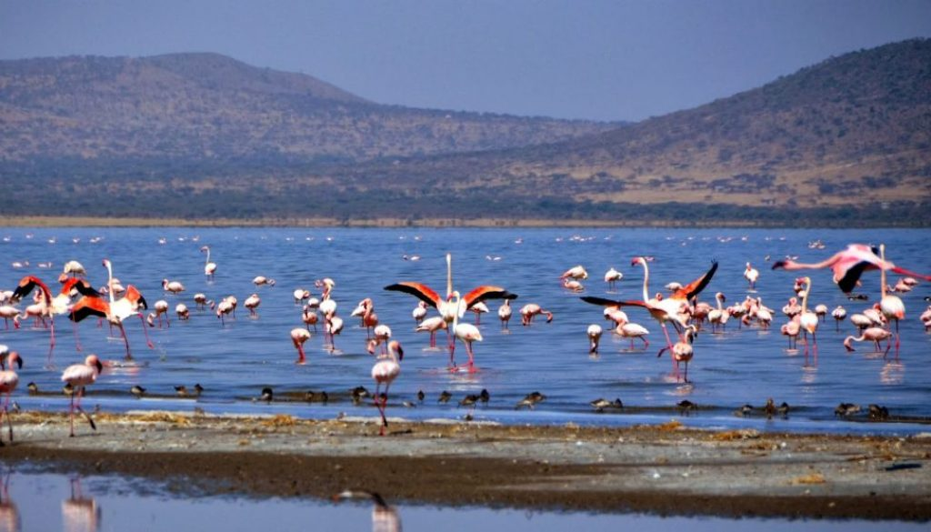 abijatta-shalla-national-park-ethiopia-adventure-tours.jpg