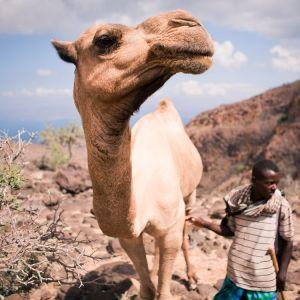 Camel-Ethiopian-Adventure-Tours.jpg