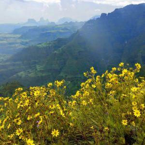 Meskel-flowers-Ethiopian-Adventure-Tours-Flora.jpg
